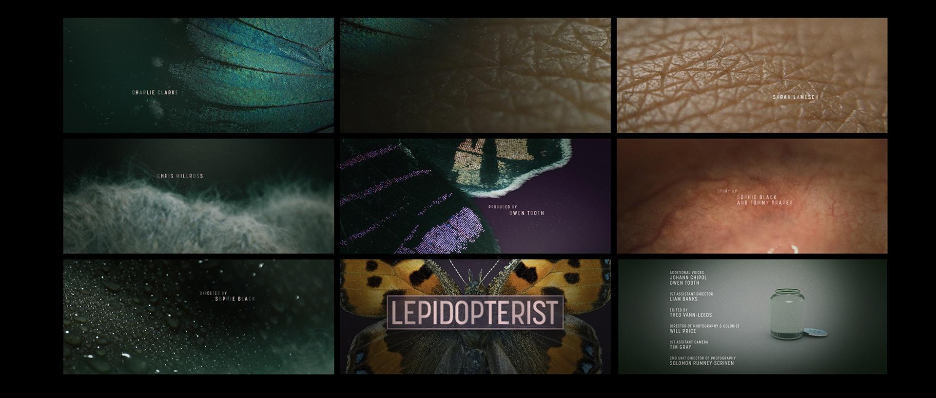 StyleFrames_LEPIDOPTERIST Main Titles_01